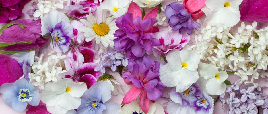 Syötävät kukat
